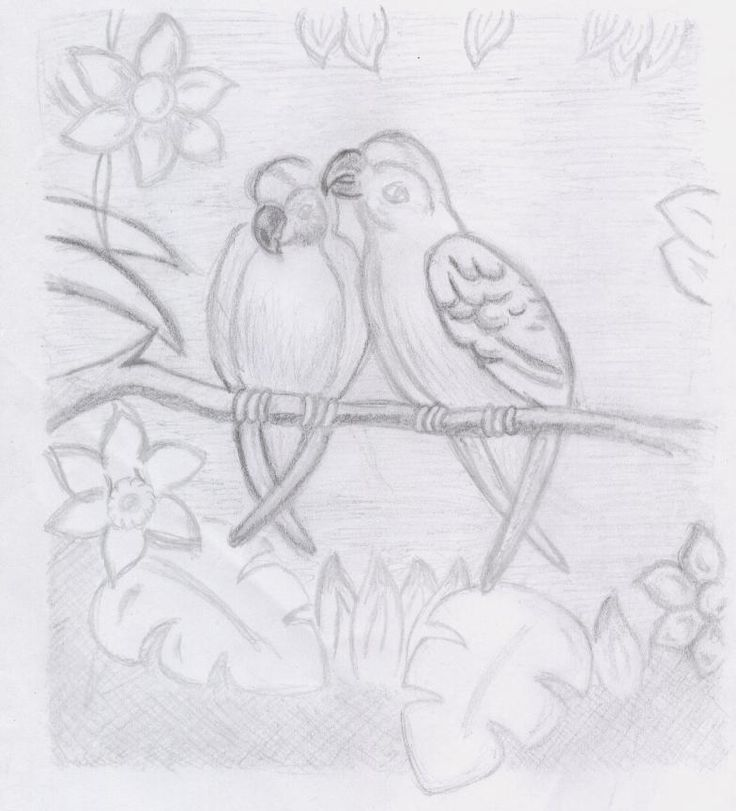 Drawn rainforest tropic Drawing by Pinterest Rainforest 최상의