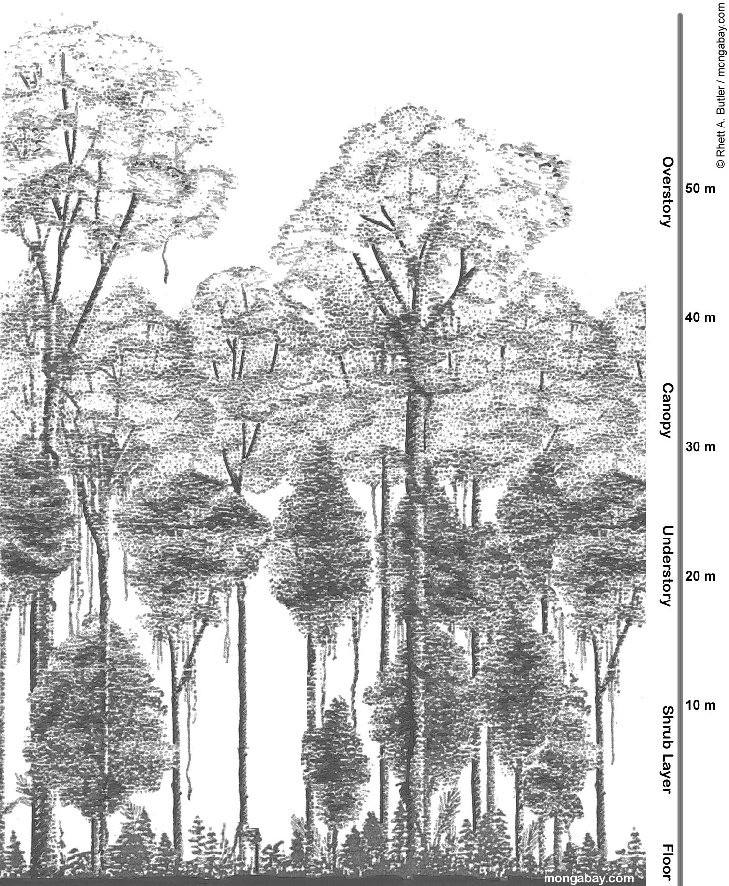 Drawn rainforest tropic Rainforest to Introduction Activities Lessons