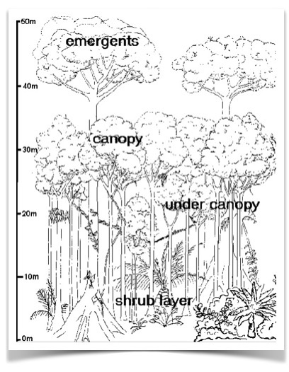 Drawn rainforest tropic The Global structure The Geography