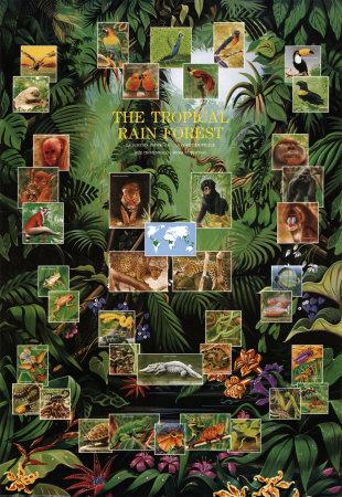 Drawn rainforest tropic A Stuff Rain Tropical Theme