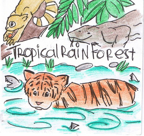 Drawn rainforest tropical forest Images Kiss beauty Tropical Tropical
