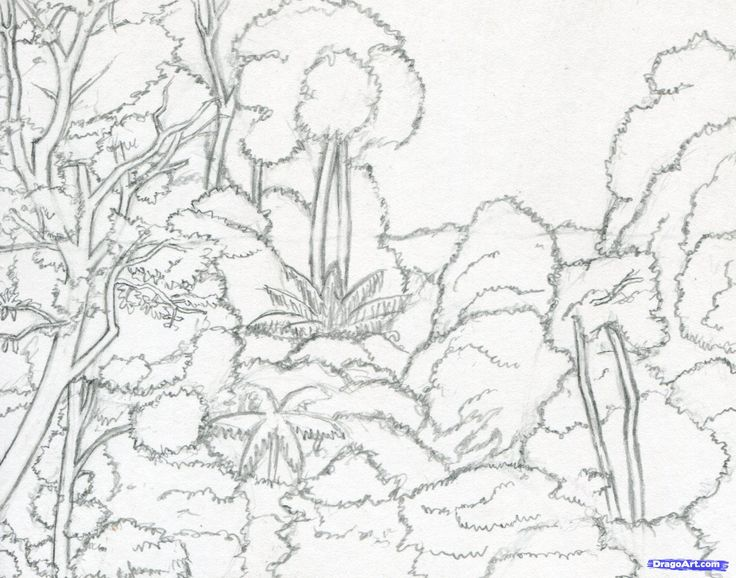 Drawn rainforest tropical forest Pinterest 34 on draw Tropical
