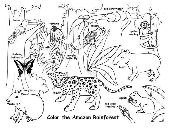 Drawn rainforest tropical rainforest biome Tropical Rainforest Drawings 34318 Tropical