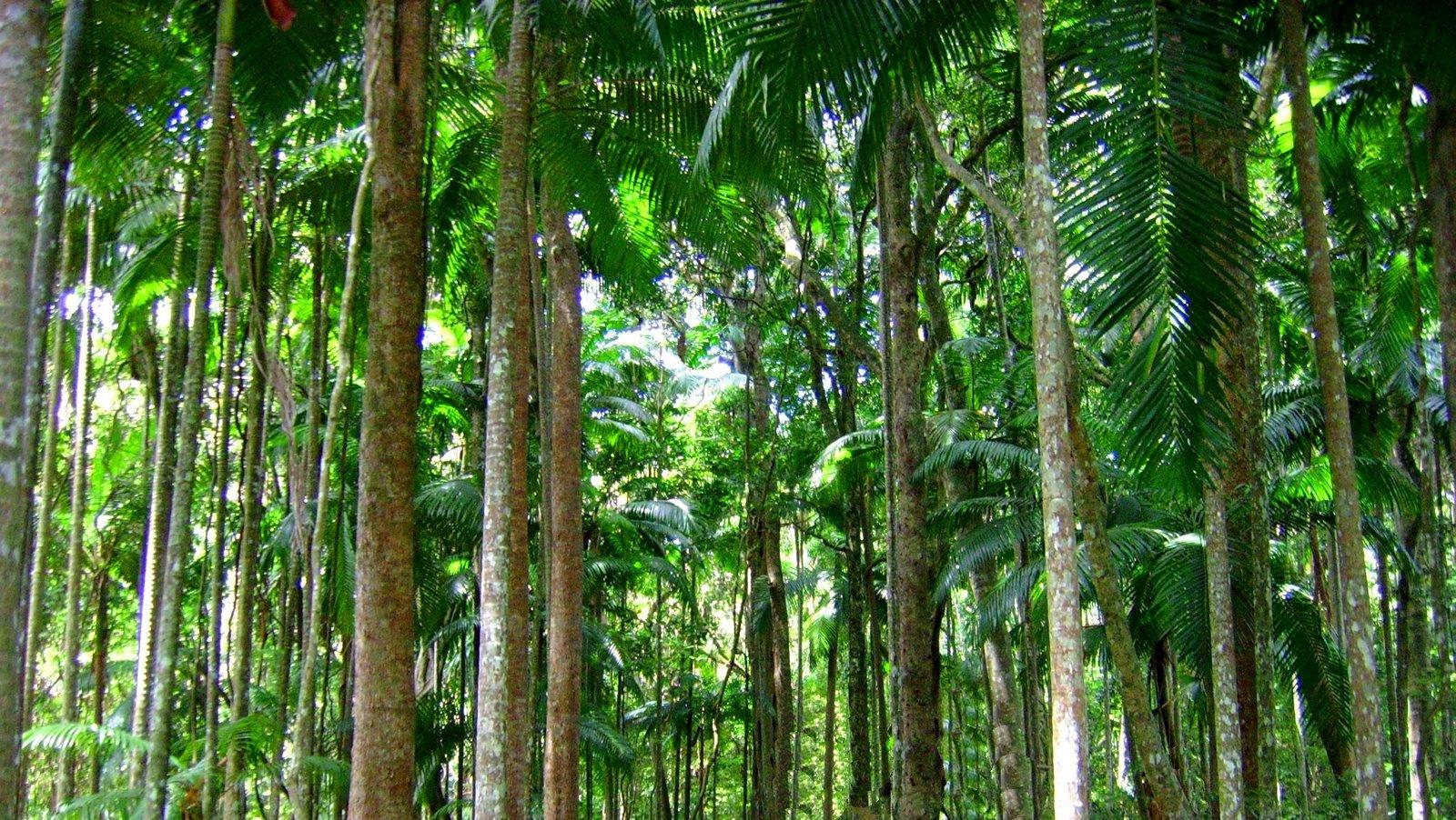 Drawn rainforest tropical rainforest biome Biome Project Rainforest 8