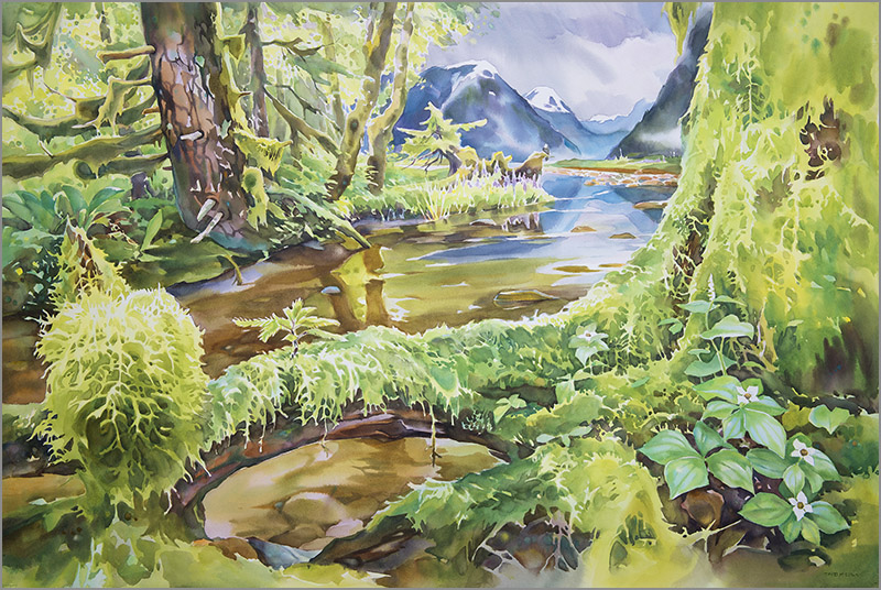 Drawn rainforest watercolor RainforestÈ David Artist Bear McEown