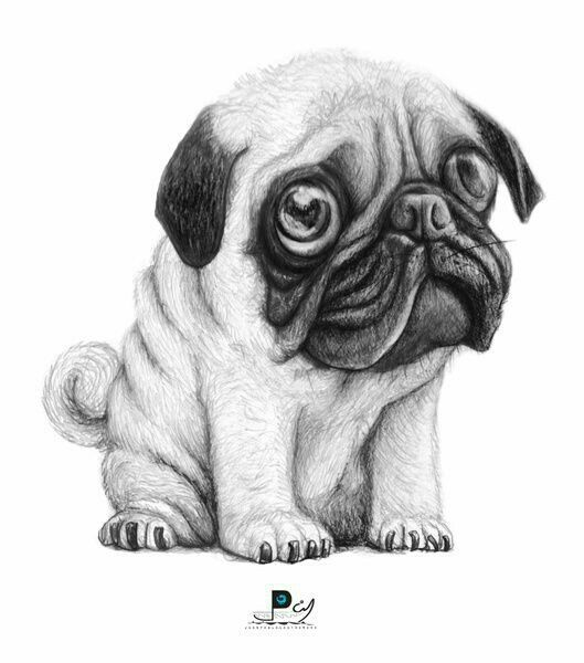 Drawn pug black and white 20+ on Pinterest ideas art