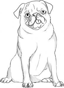 Drawn pug anime Pug Pets Online images Animals