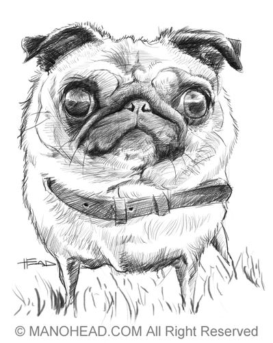 Drawn pug cartoon ☮ more and ♥ Pugs