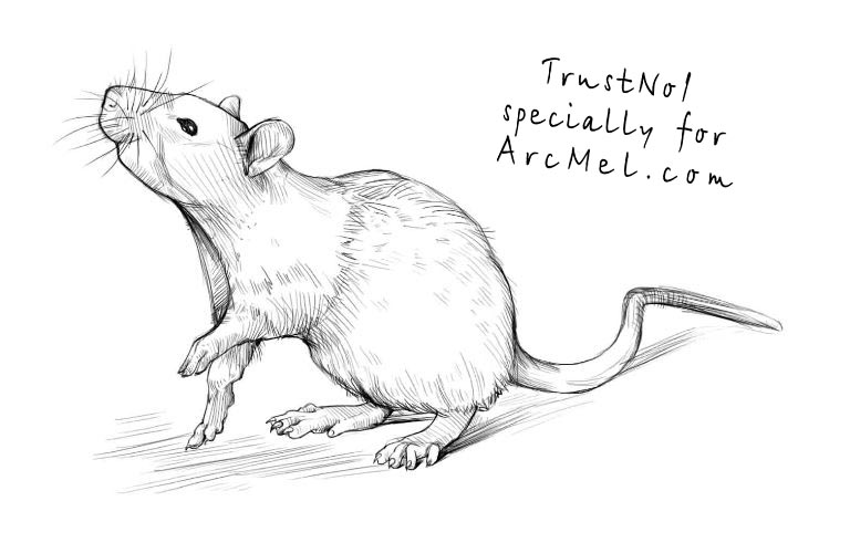 Drawn rat Draw ARCMEL rat Март a