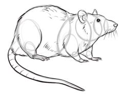 Drawn rat Rat rat rats drawing Drawing
