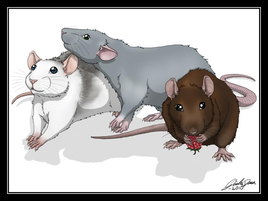 Drawn rat anime Rat Drawings rats Rat Cute