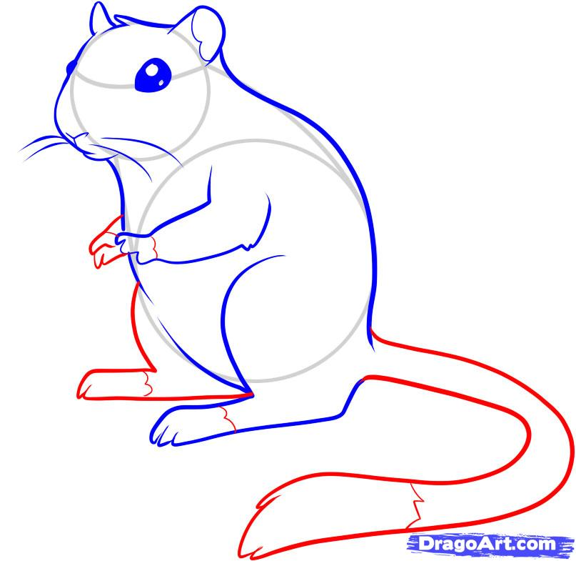Drawn rat anime To draw Gerbil to a