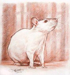 Drawn rat art Greyviolett and deviantart Portrait Pinterest