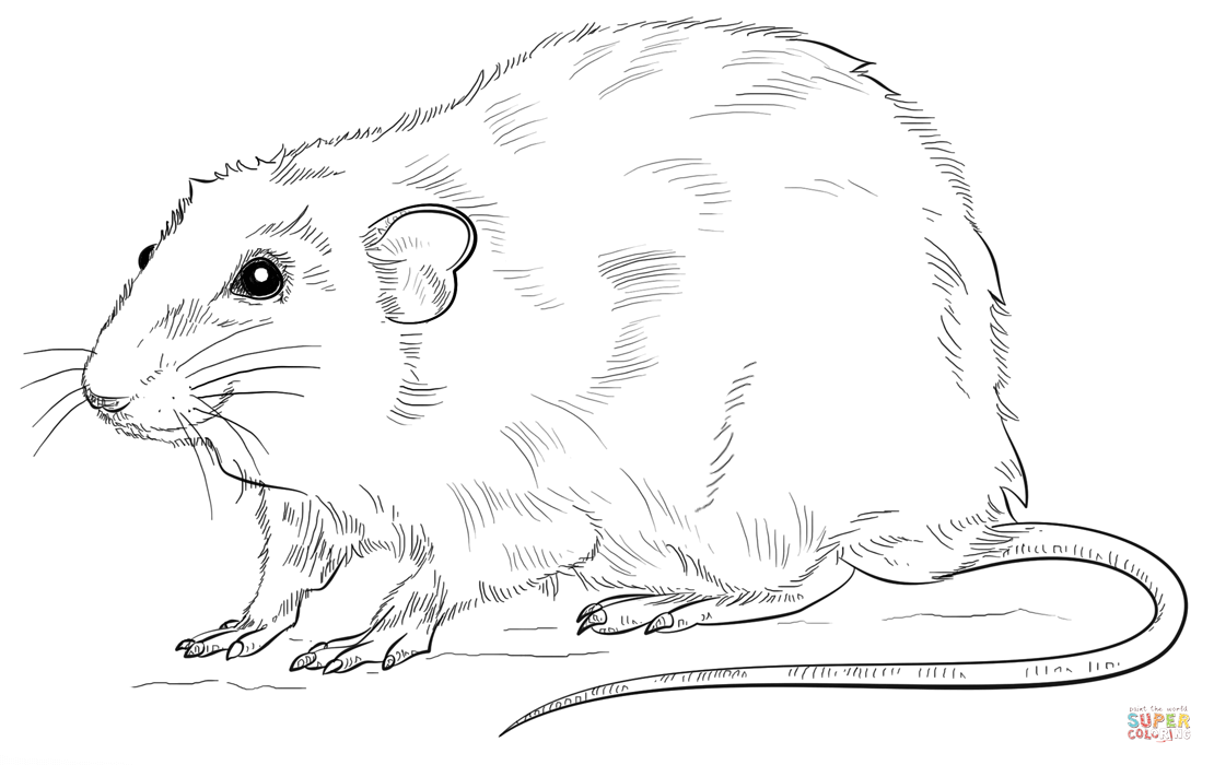 Drawn rat colouring Printable online (compatible it coloring