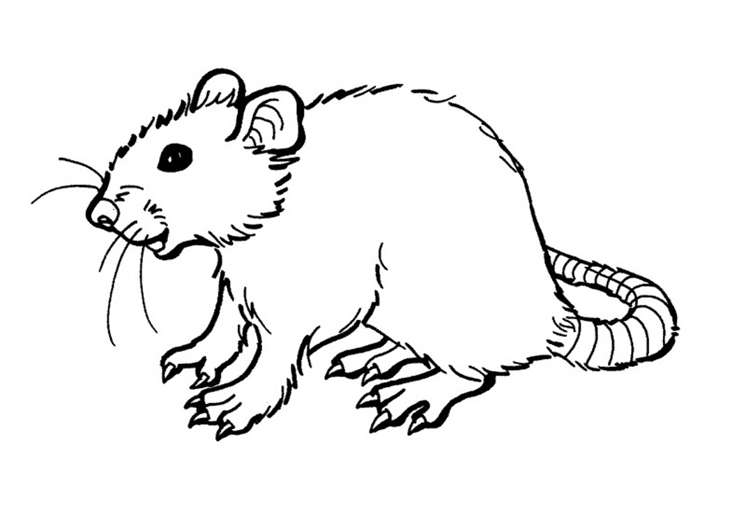 Drawn rat colouring Printable For Rat Page Kids