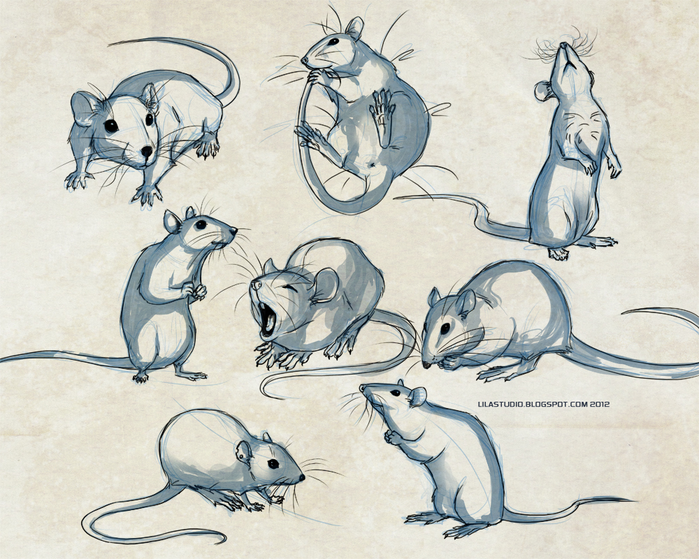 Drawn rat creepy Blog: Blog:  Lilas Art