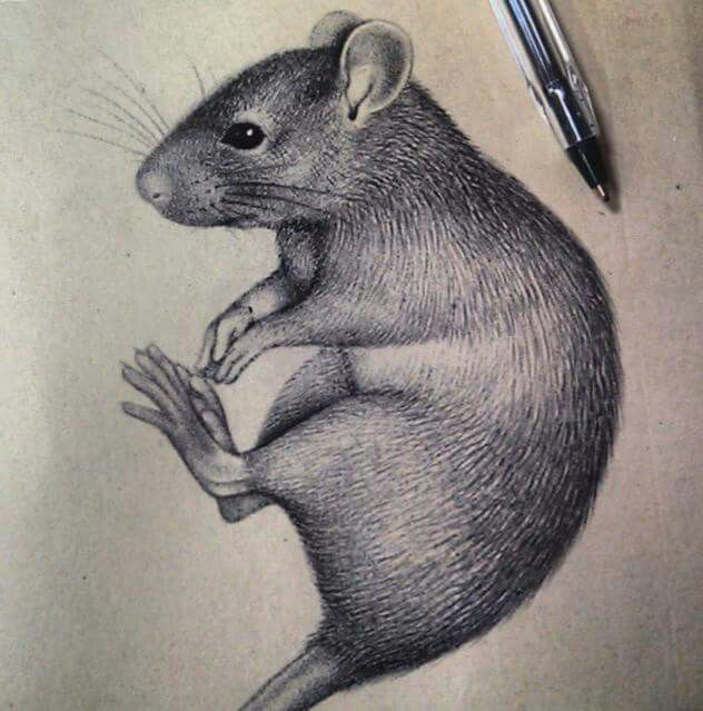 Drawn rat creepy Best and Rat ink Pinterest