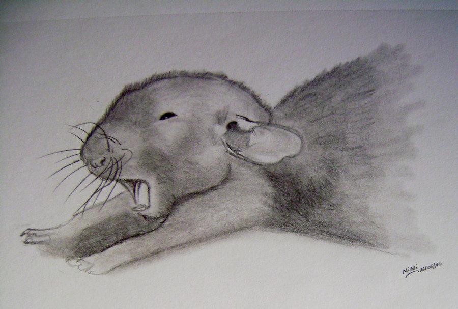 Drawn rat cute Rat Fancy Rat ionantha Drawing