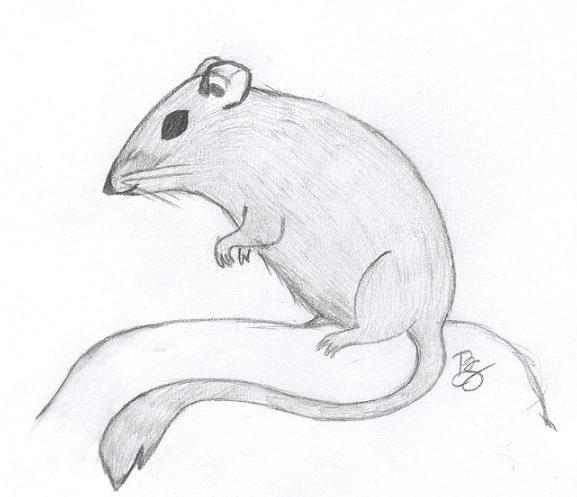 Drawn rat cute Kangaroo Cute kangaroo rat Rat