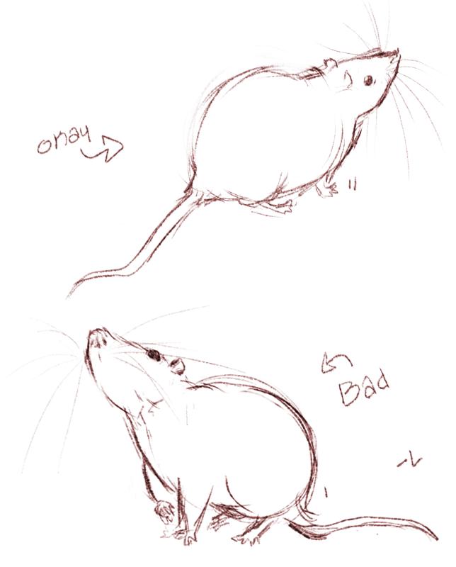 Drawn rat cute Drawing Cute rats drawing Rats