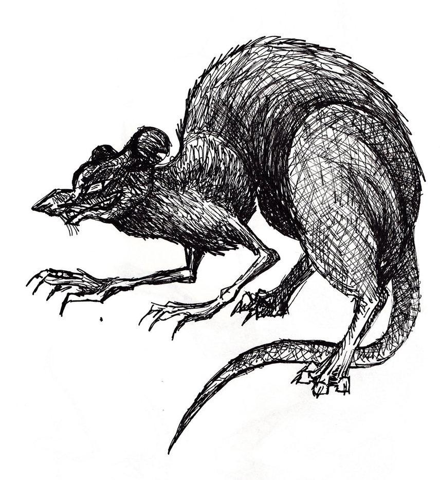 Drawn rat dire Rats Medieval and Rats Evil