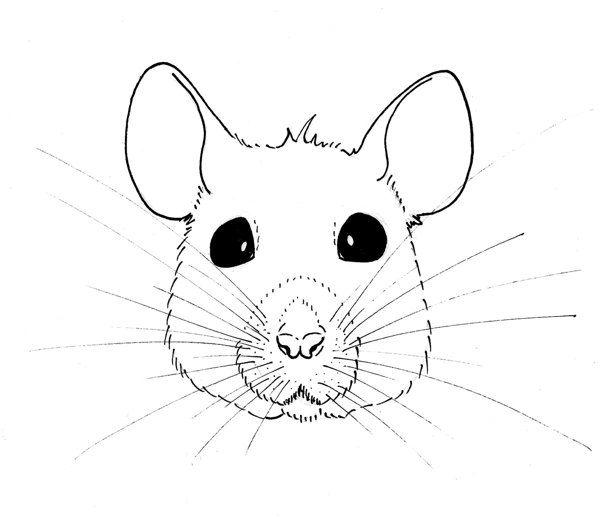 Drawn rat face By images on Behance Belinda