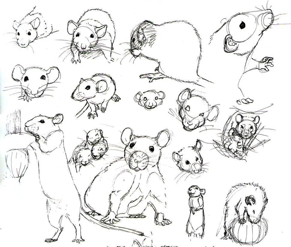 Drawn rat face Illustration Illustration photo#26 Face Rat