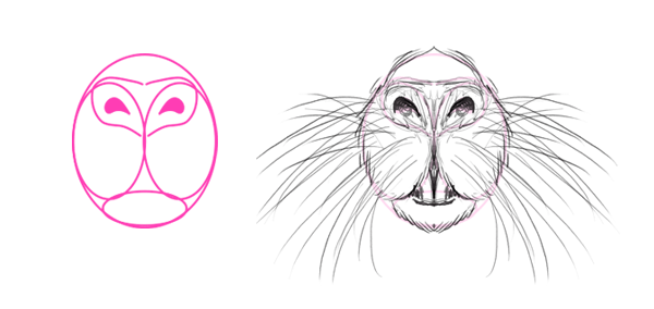 Drawn rat face Their draw Animals: Big whiskers