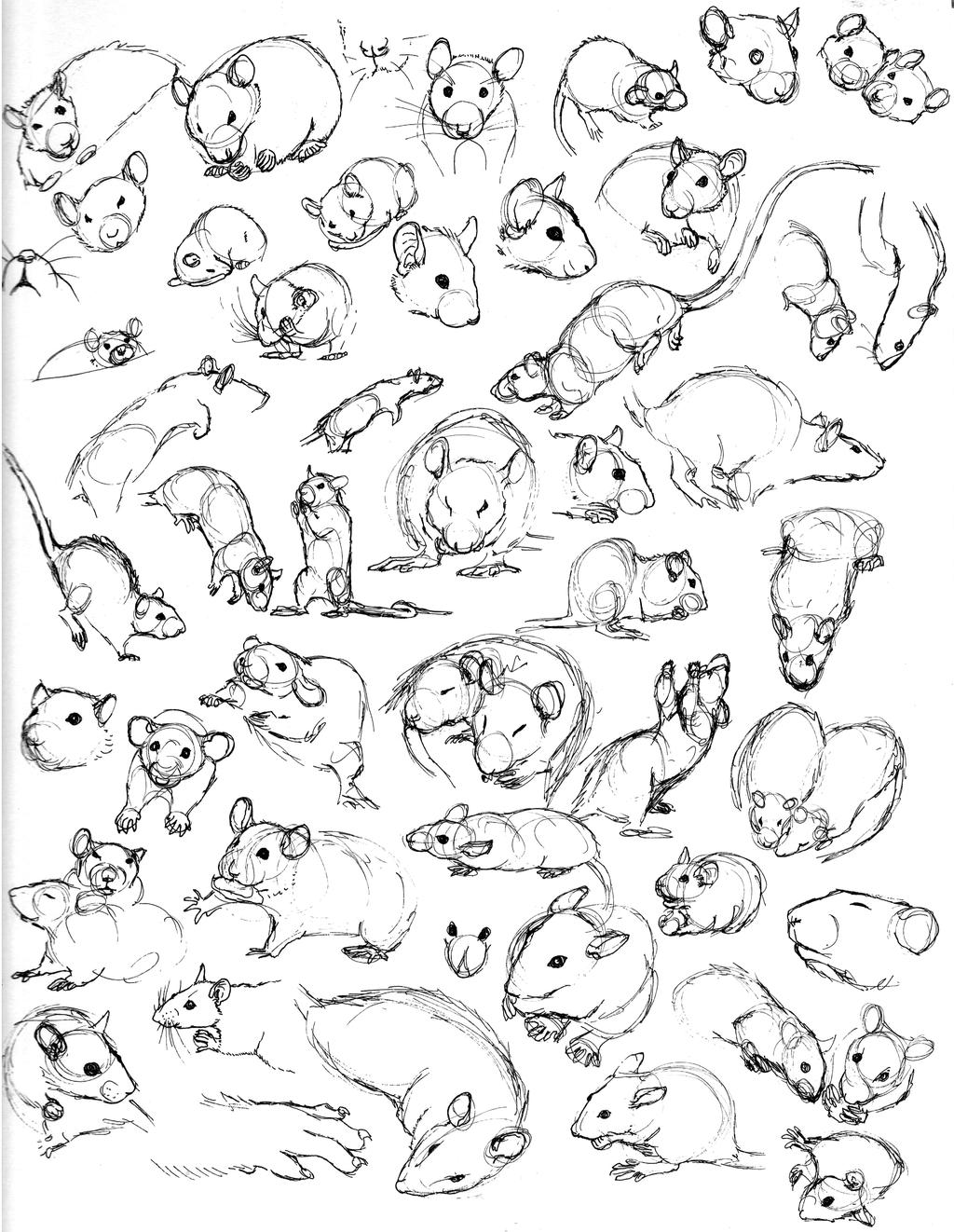 Drawn rat fancy 5 nEVEr mor Rat Sketch