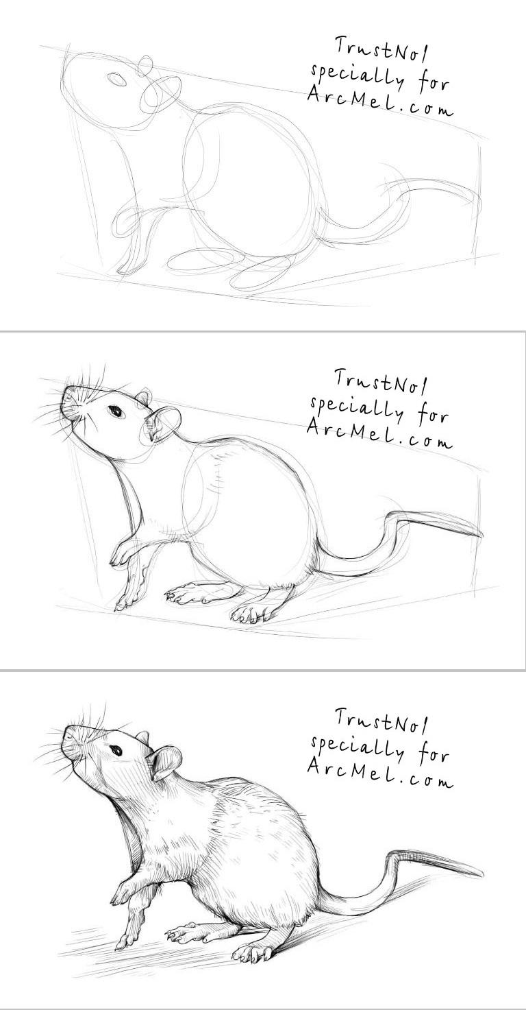Drawn rat farm animal Pin to this and Rat