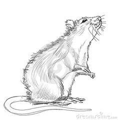 Drawn rat funny Pinterest Ratties dierenwinkeltje Het cute