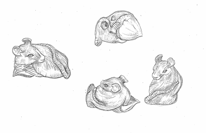 Drawn rat grey Sketches rat half Bristol Museum