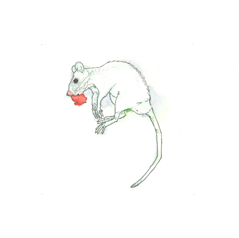 Drawn rat hooded Dead Roadkill Rat Print