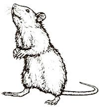 Drawn rat i love you Stamp! 4 to  have
