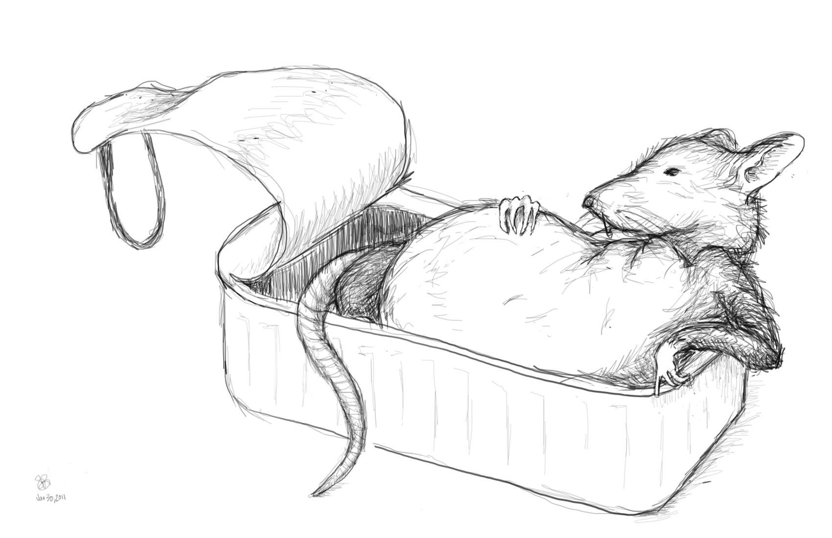 Drawn rat impossible Rat Drawings Easy Easy in