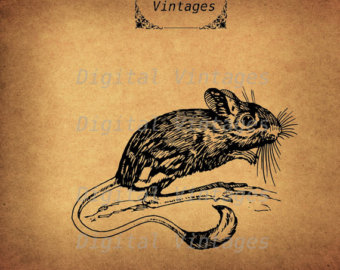 Drawn rat jerboa Rodent Vintage Art Jerboa Antique