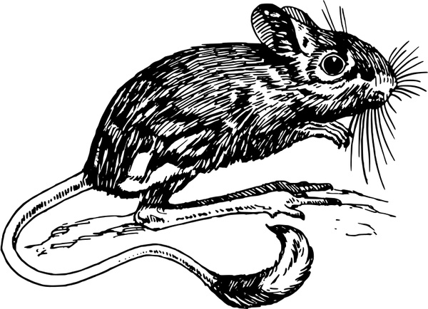 Drawn rat jerboa Vector vector svg vector in