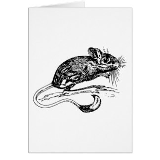 Drawn rat jerboa Jerboa Zazzle Card Greeting Cards
