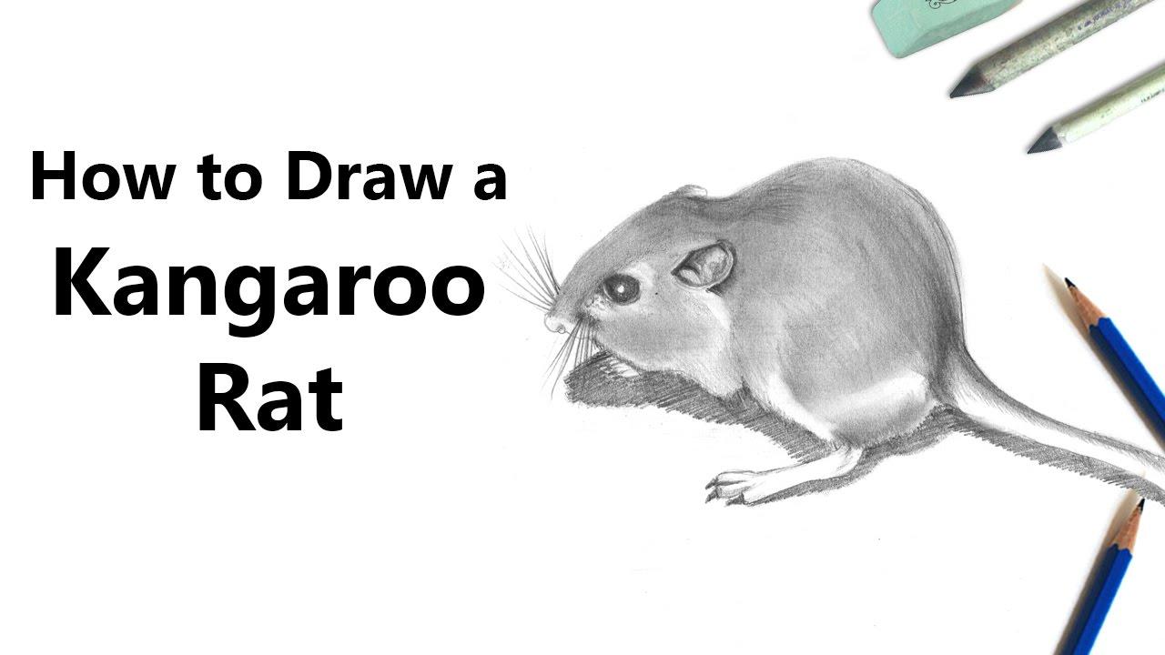 Drawn rat kangaroo rat Lapse] Lapse] with to Pencils