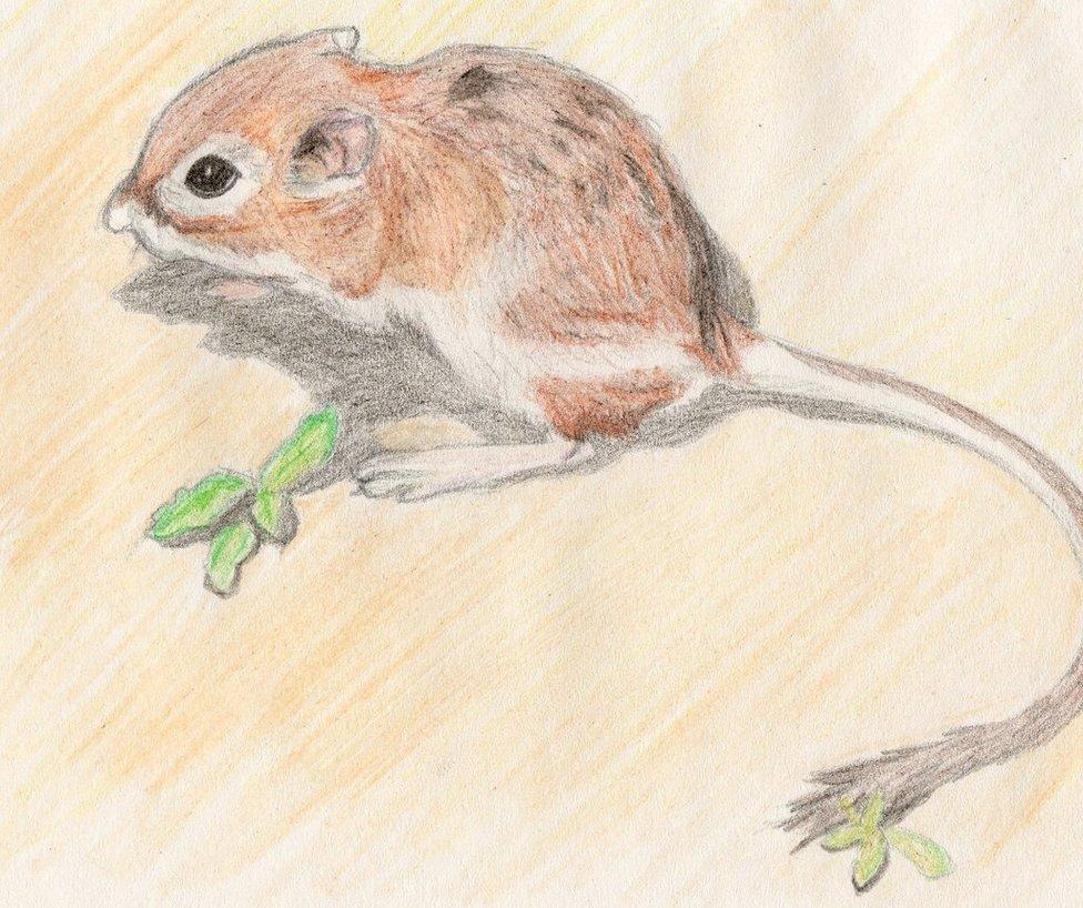 Drawn rat kangaroo rat XHalloweenx DeviantArt Rat xHalloweenx Kangaroo