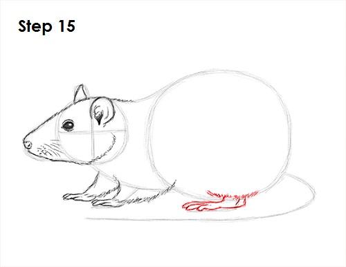 Drawn rat line drawing Rat Rat 15 How Draw