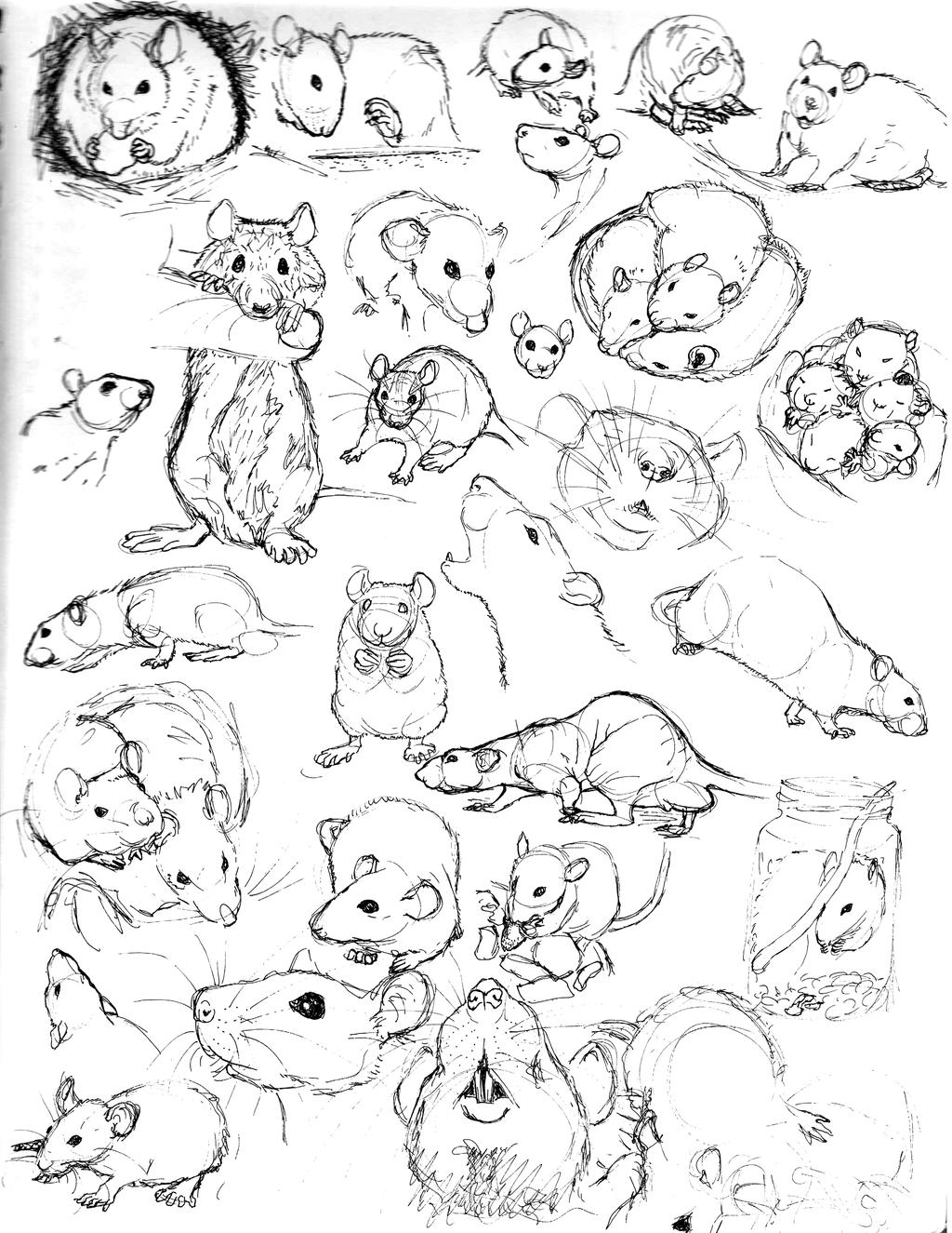 Drawn rat line drawing Com nEVEr Sketch deviantart Practice