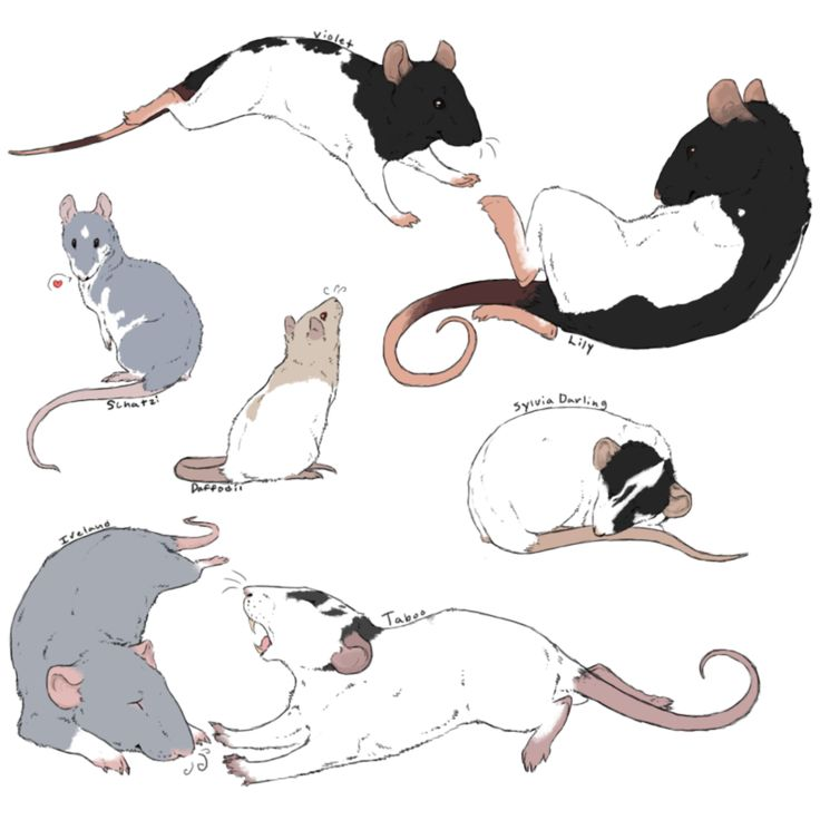 Drawn rat mean Love images can as Bows