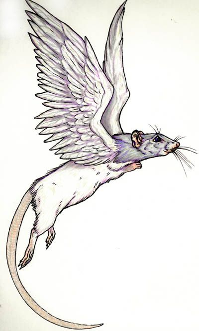 Drawn rat mean Mouse 25+ The on ideas
