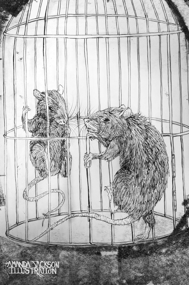 Drawn rat nimh NIMH the and