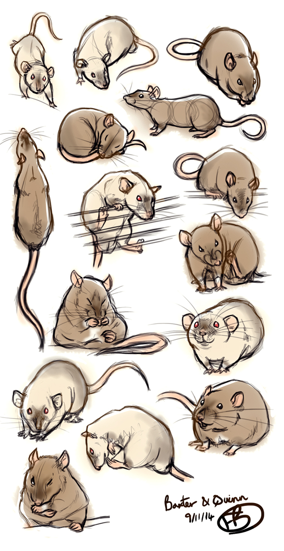 Drawn rat pet rat And Sketches this sketches on