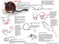 Drawn rat pet rat Com/c3ba2078ed83965f0f88fa1e1fbd3a20/tumblr_mzhhq4BwdM1rjw0mwo5_1280 Anatomy media Deskleaves TipsDrawing