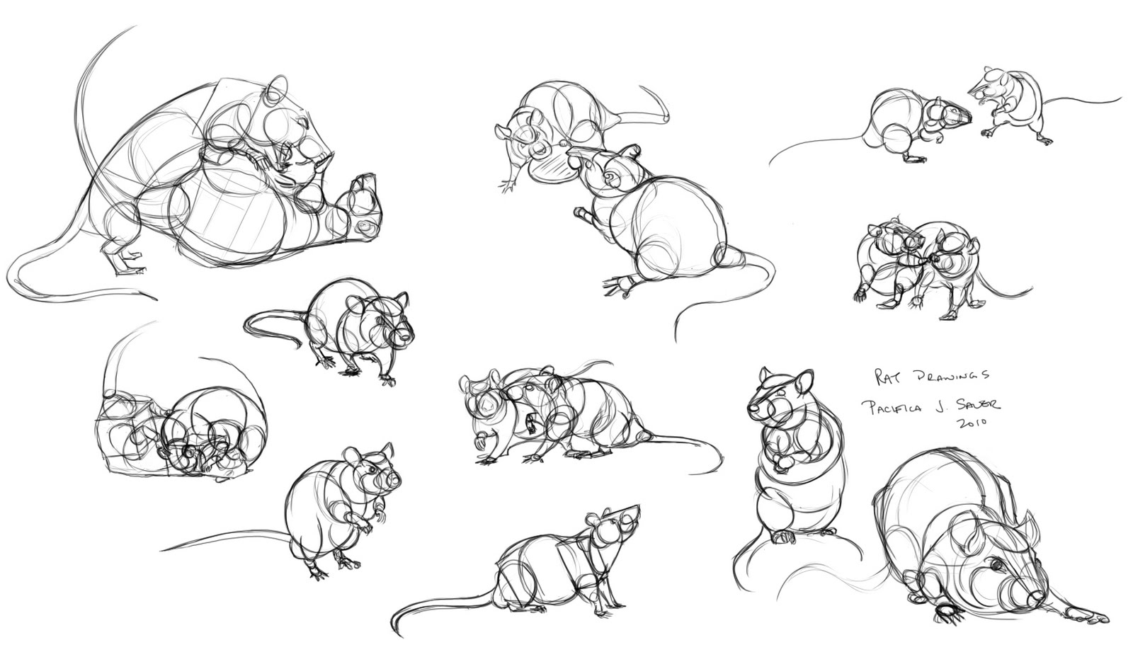 Drawn rat pet rat Rats drawing Drawing photo#28 Rats