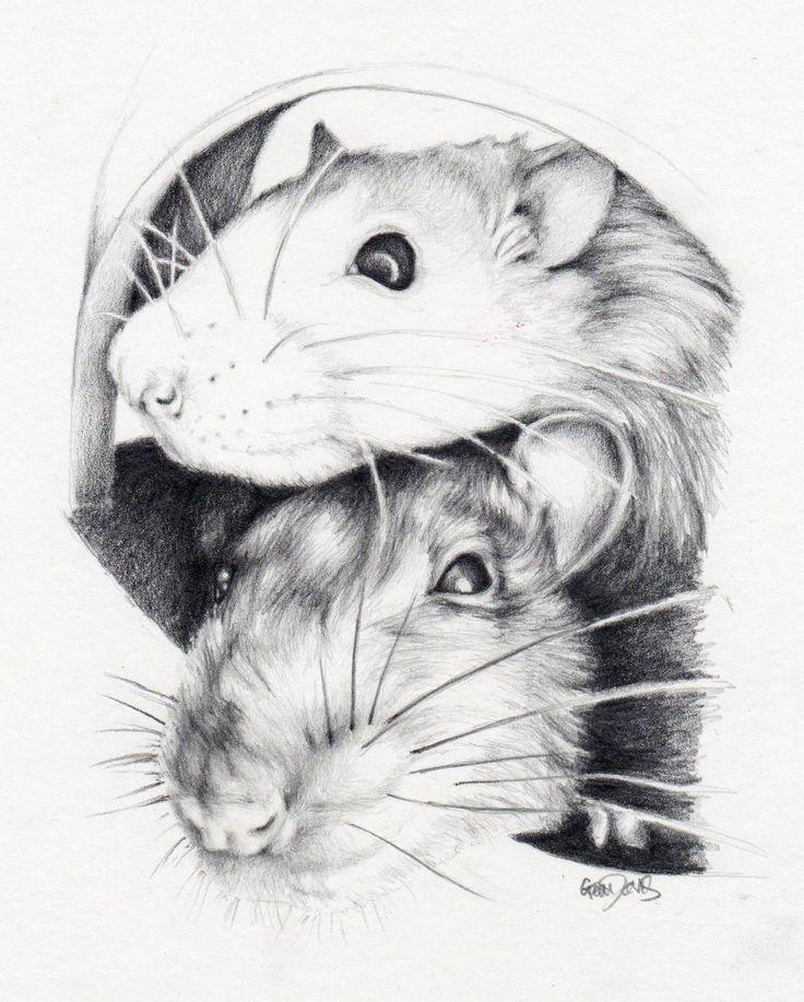 Drawn rat pet rat Rats Pinterest sister's images by
