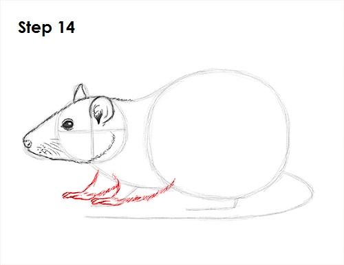 Drawn rat rat head How 14 a Draw Rat